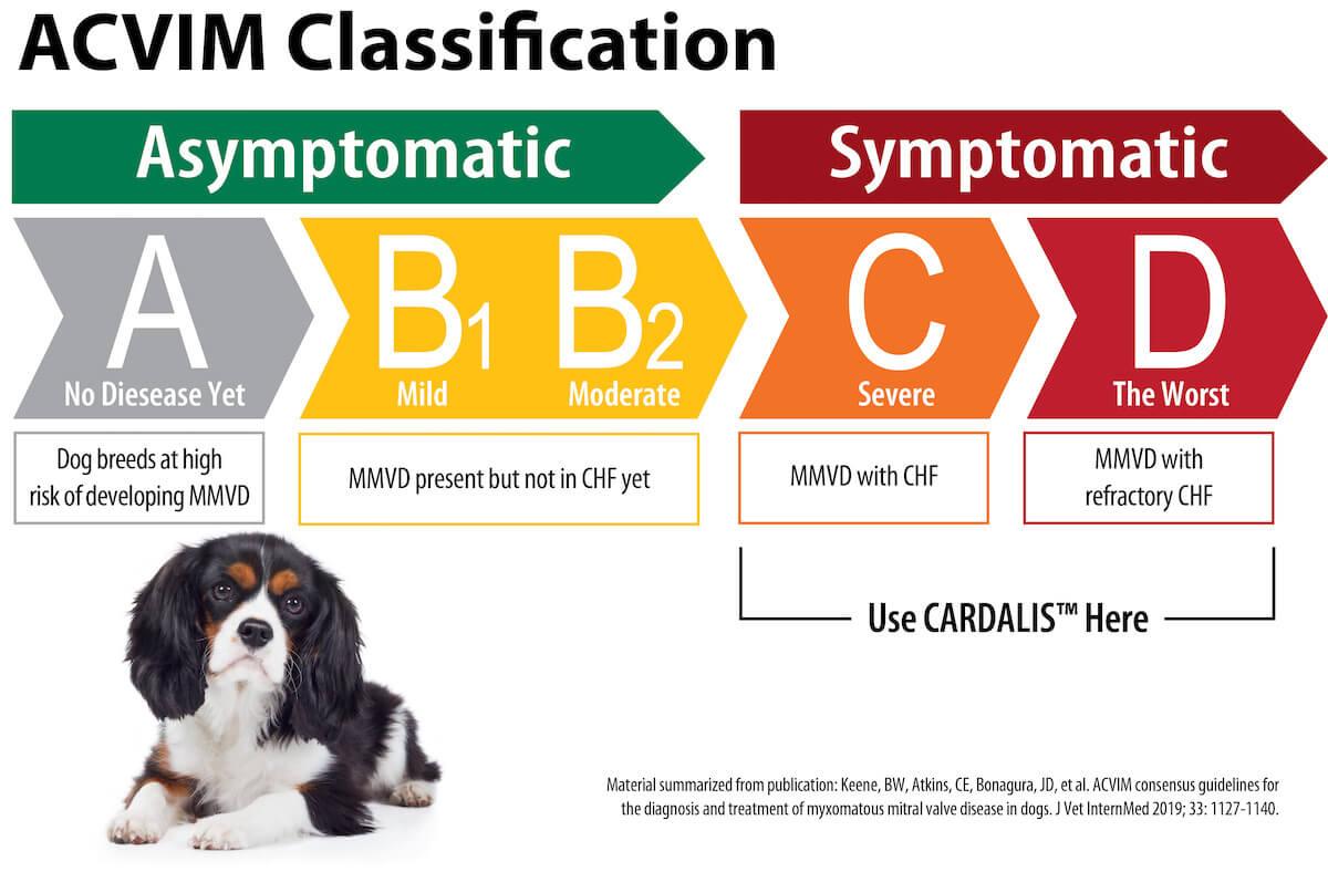 ACVIM Classification